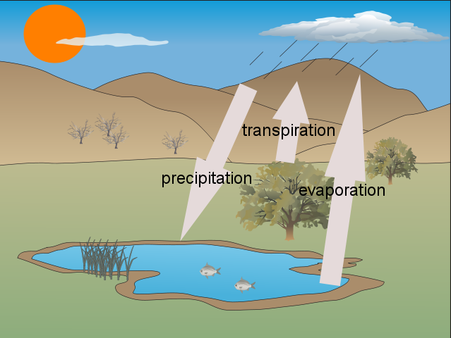 Rose's Water Cycle