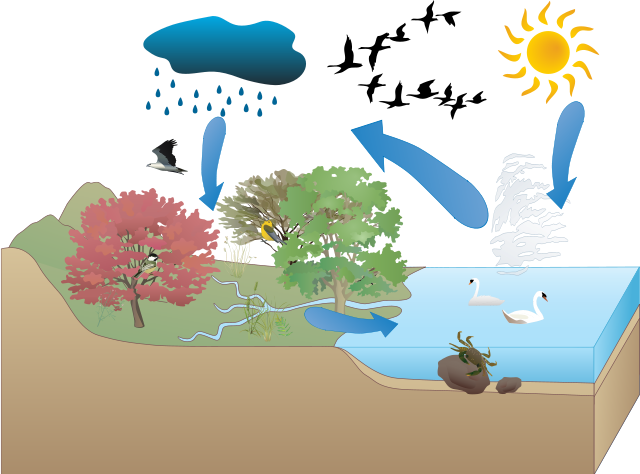 Netanya's Water Cycle