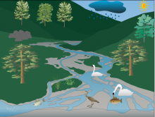 Antonio's Mountain river ecosystem