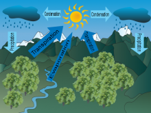 Georgie's Water Cycle
