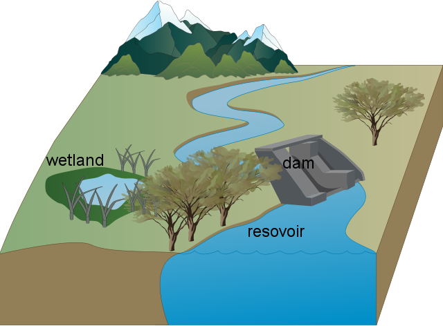 Ella's Wetland, Dam and Resovoir