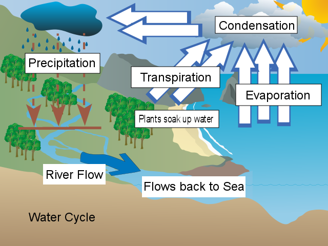 Andrew Water Cycle