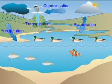 Prasanth's Water Cycle