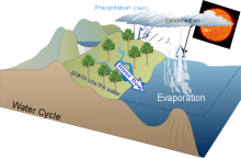 Water Cycle (Kent)