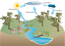 Annabelle's water cycle