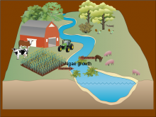 Nutrients & their effects on waterways
