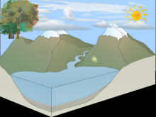 The water cycle-Shannon Lanza