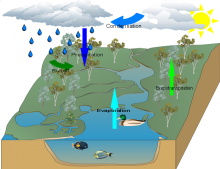 Maggies water cycle finished