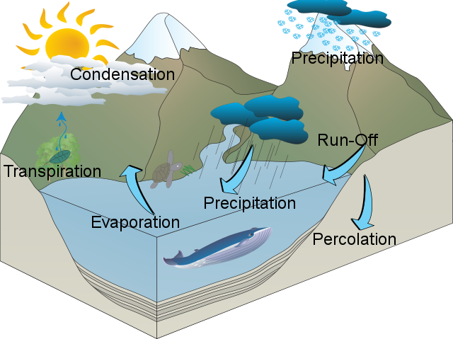 Kevin's Water Cycle