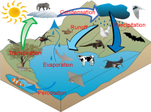 Water cycle by Jarrah Palethorpe Lyneham High version 2