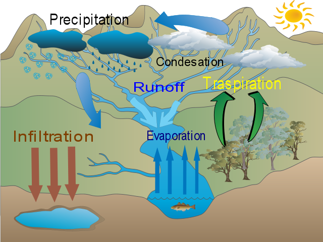 The Water Cycle of a Fresh Water Environment