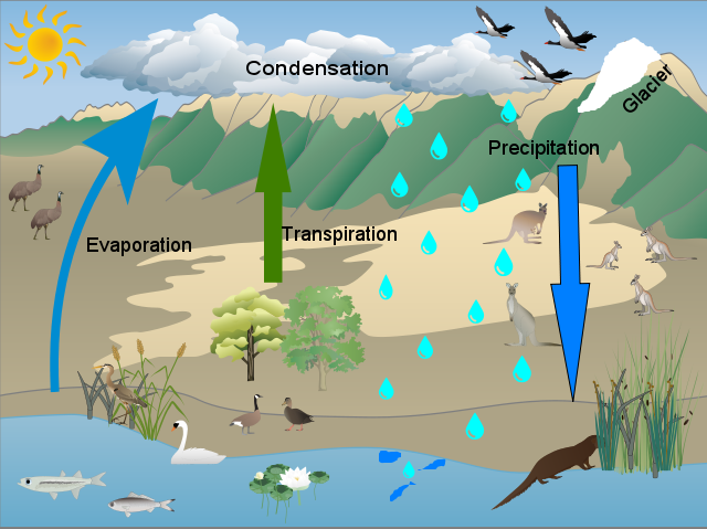 Jessica Hill Water Cycle