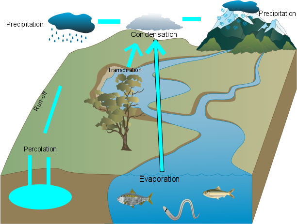 Alexander Water Cycle