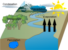Jenny Nguyen Water Cycle Final