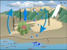 Jessica H's Water Cycle