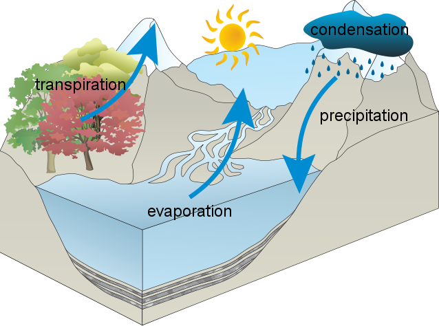 Ellas Water Cycle Usaus H2o