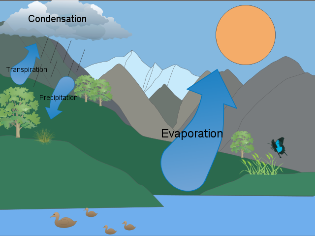 Transpiration Water Cycle Angela 39 s Water Cycle